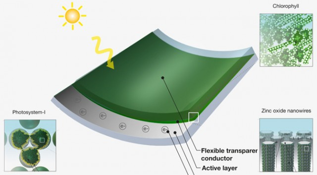 Grass-solar-power1-diarioecologia